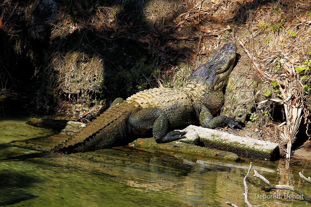 Alligator Smile by Deborah  Benoit
