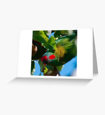 WO ~ PARROT ~ Musk Lorikeet by David Irwin 061119 Greeting Card