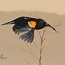 Red-winged Blackbird On The Beach by DigitallyStill