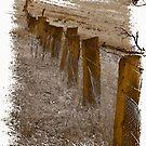 Fenced by Jennifer Craker