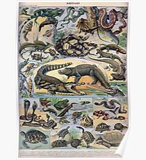 Adolphe Millot Reptile Poster