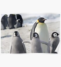 Penguins at Snow Hill Island Poster