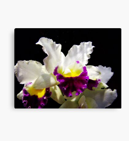 Orchid Collection - 2 Canvas Print