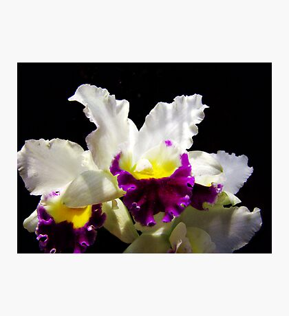 Orchid Collection - 2 Photographic Print