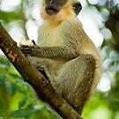 Monkey 2 by Jacinthe Brault