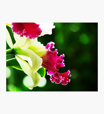 Orchid Collection - 3 Photographic Print
