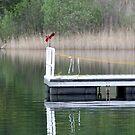 Lake Saltonstall by kremphoto