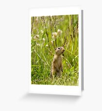 Ground Squirrel Greeting Card