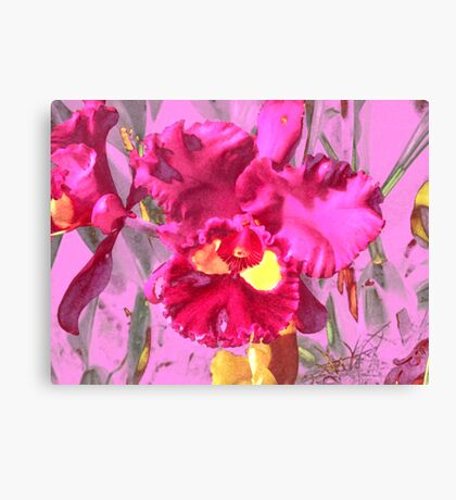 Orchid Collection - 4 Canvas Print