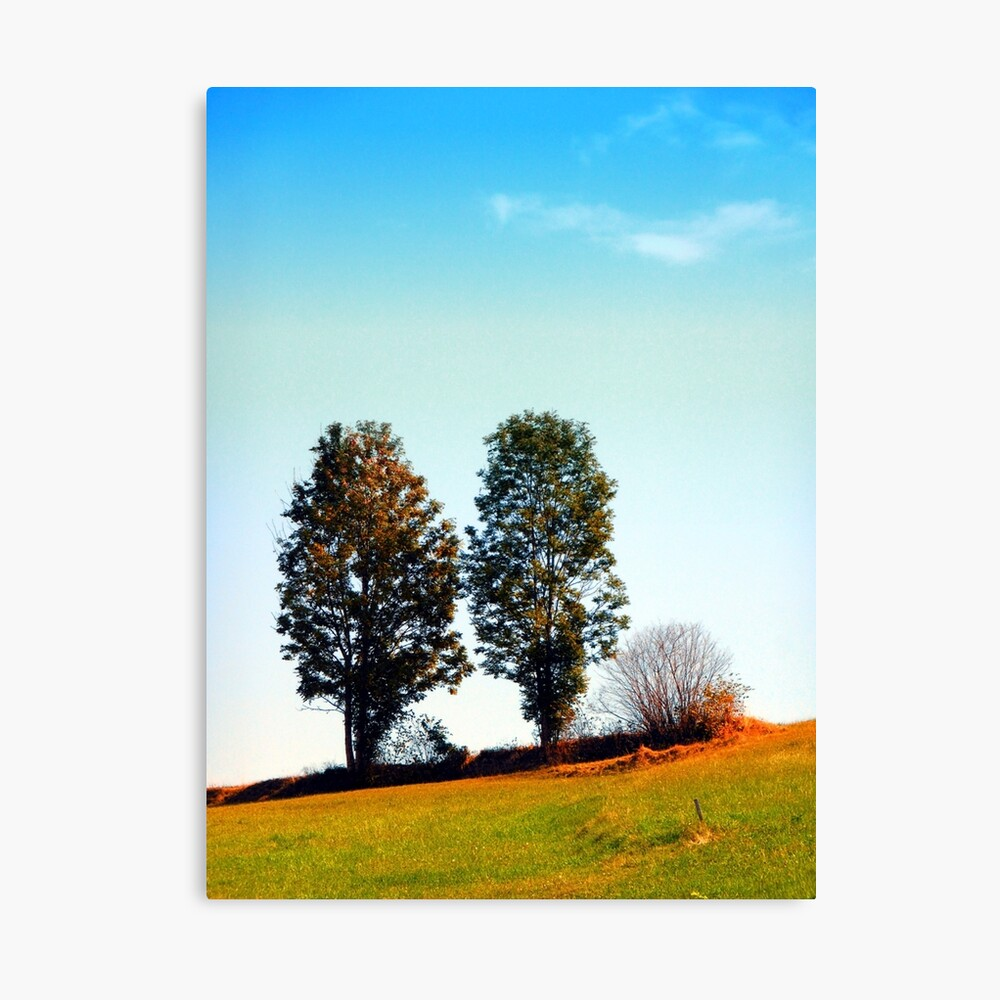 Twin trees and a bush Canvas Print