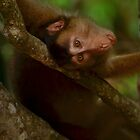 Macaque lying by emmelined