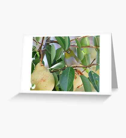 Silvereye's Delight Greeting Card