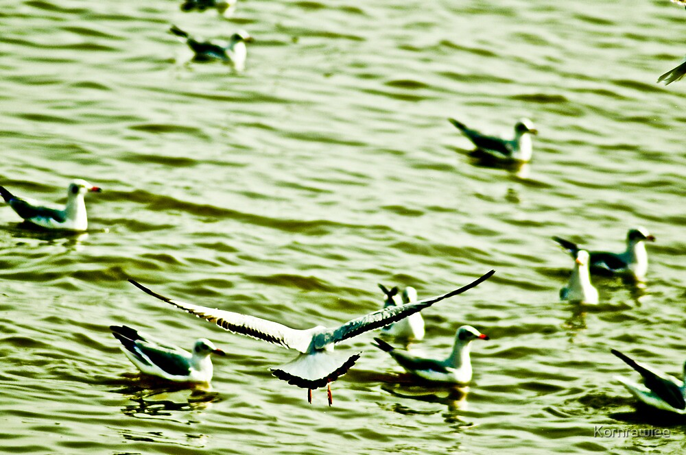 Brrraaa... give me the way, I'm landing..... by Kornrawiee