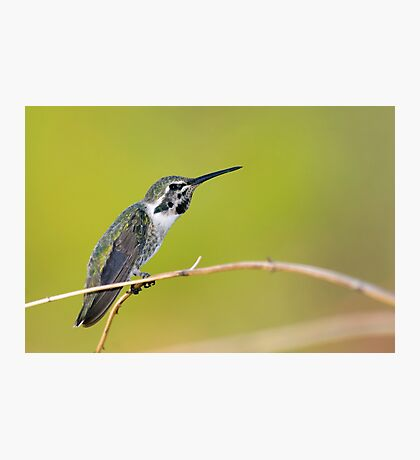 Hummer Stretch Photographic Print