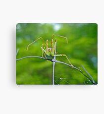Assassin Bug Nymph (Reduviidae) Canvas Print e267c24f362b7