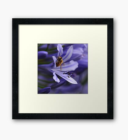 Bee in the Midst Framed Print