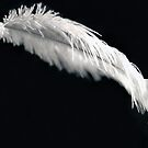 Featherweight  by Sara Johnson