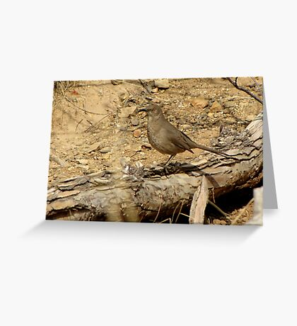 Curved-billed Thrasher II Greeting Card