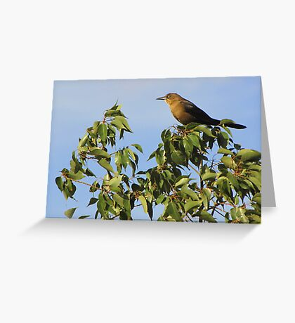 Great-tailed Grackle ~ Female Greeting Card