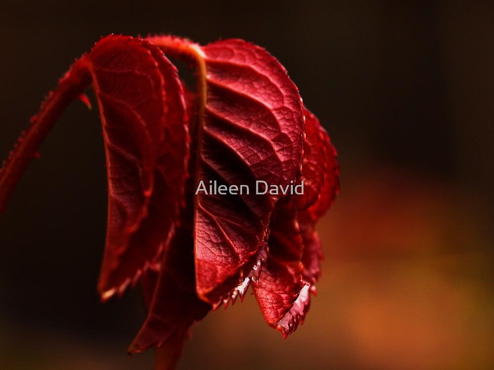 Despair #2 by Aileen David