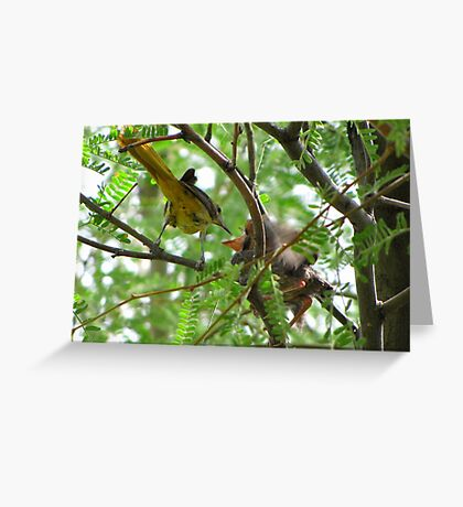 Hooded Orioles ~ Mother feeding Baby Greeting Card
