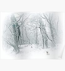 Lost in white... Poster