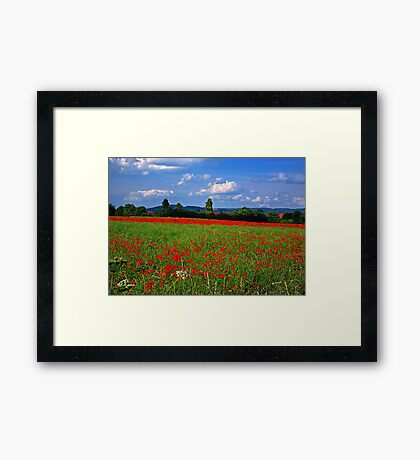Poppy Field  (Early May) Framed Print
