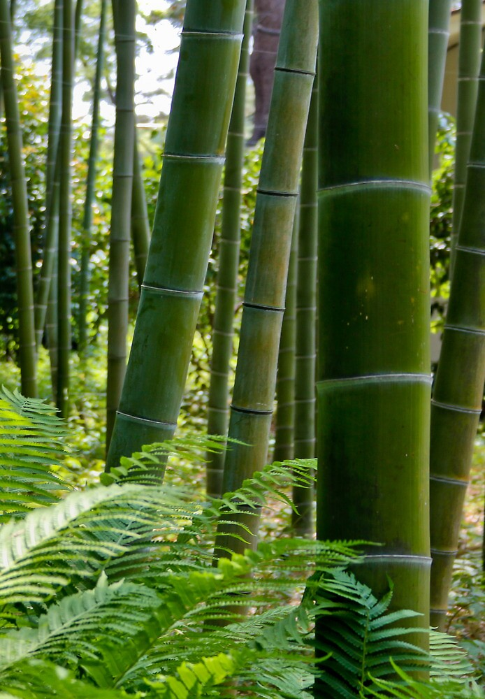 Imperial Bamboo - Tokyo by hawkea