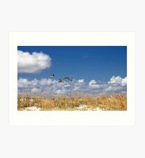 Pelicans soaring over Anastasia Island Art Print