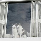 Two cats with a view by Fran0723