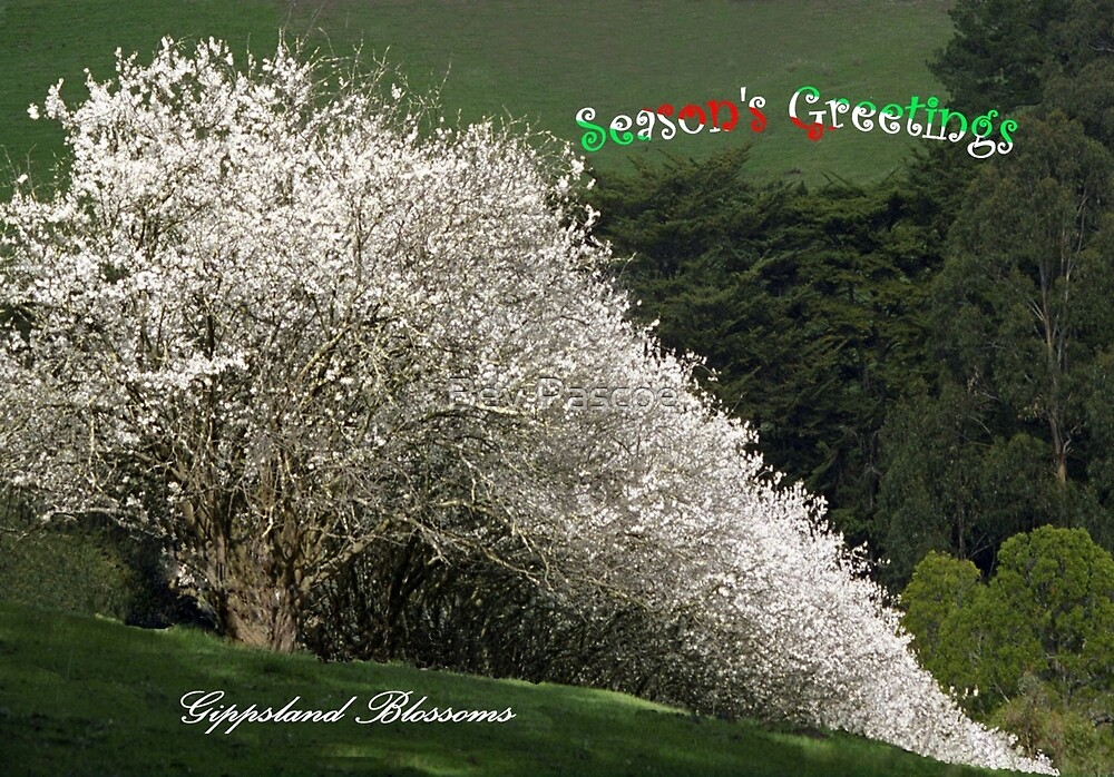 Gippsland Blossoms at Christmas by Bev Pascoe