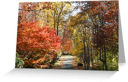 Brilliant Colors on a Fall Day by daphsam