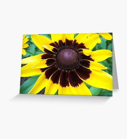 Center of Attention © Greeting Card