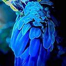 Blue Bird  by Michael Todd