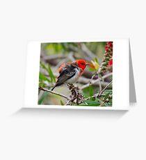 SC ~ WO ~ HONEYEATER ~ Scarlet Honeyeater by David Irwin 071119 Greeting Card