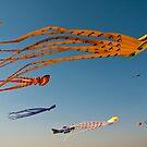 Kites flying high by NicoleBPhotos