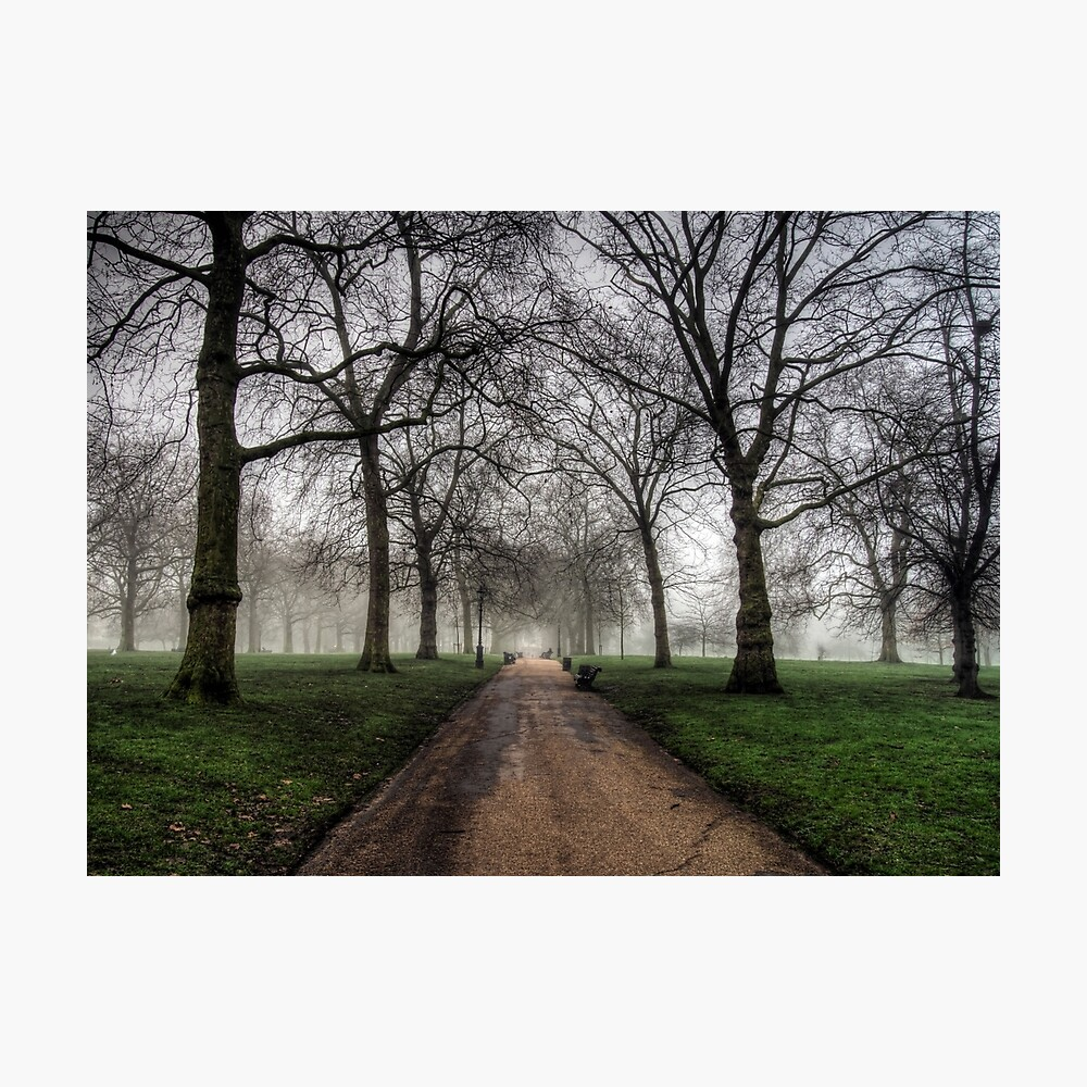 Fog in Green Park, London Photographic Print