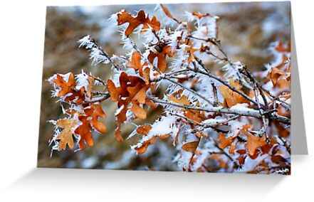 Frozen Leaves by Gary Taylor