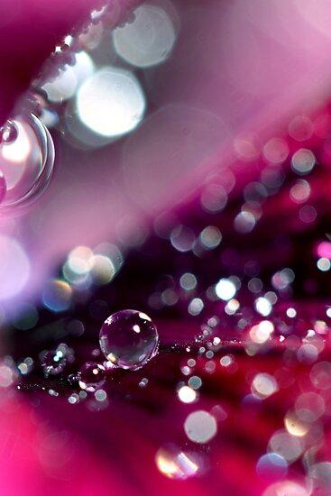 Velvet Pansy Sparkles by Sharon Johnstone