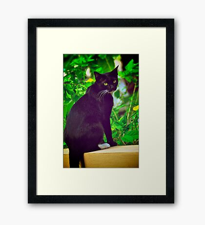 Aha, shutter click again?! mow...:Explore Featured 17Sep11, Got 2 Featured Works Framed Print
