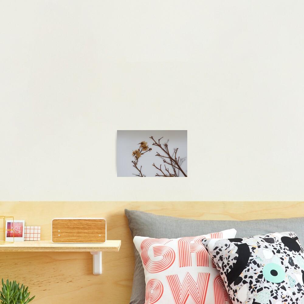 Winter Roses Photographic Print