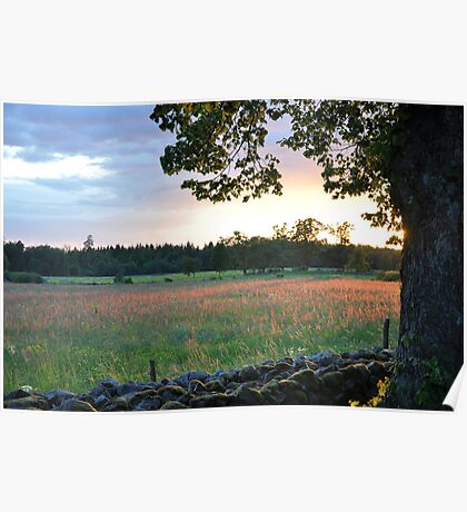 Field at Sunset Poster