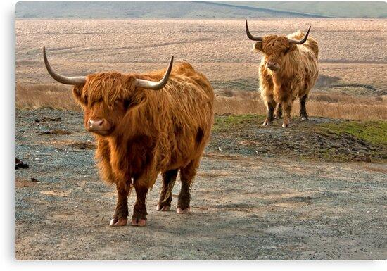 Beautiful Highlanders by Trevor Kersley