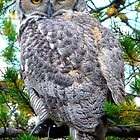 """Grey Horned Owl  """"Who Who Do I see?"""" by MaeBelle"""