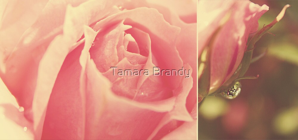 roses of a summer past by Tamara Brandy