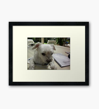 What about me? Forget the homework Framed Print