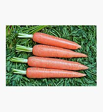 Fresh ripe raw carrot  Photographic Print