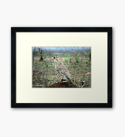 A MOMENT IN TIME - THE CHEETAH Framed Print