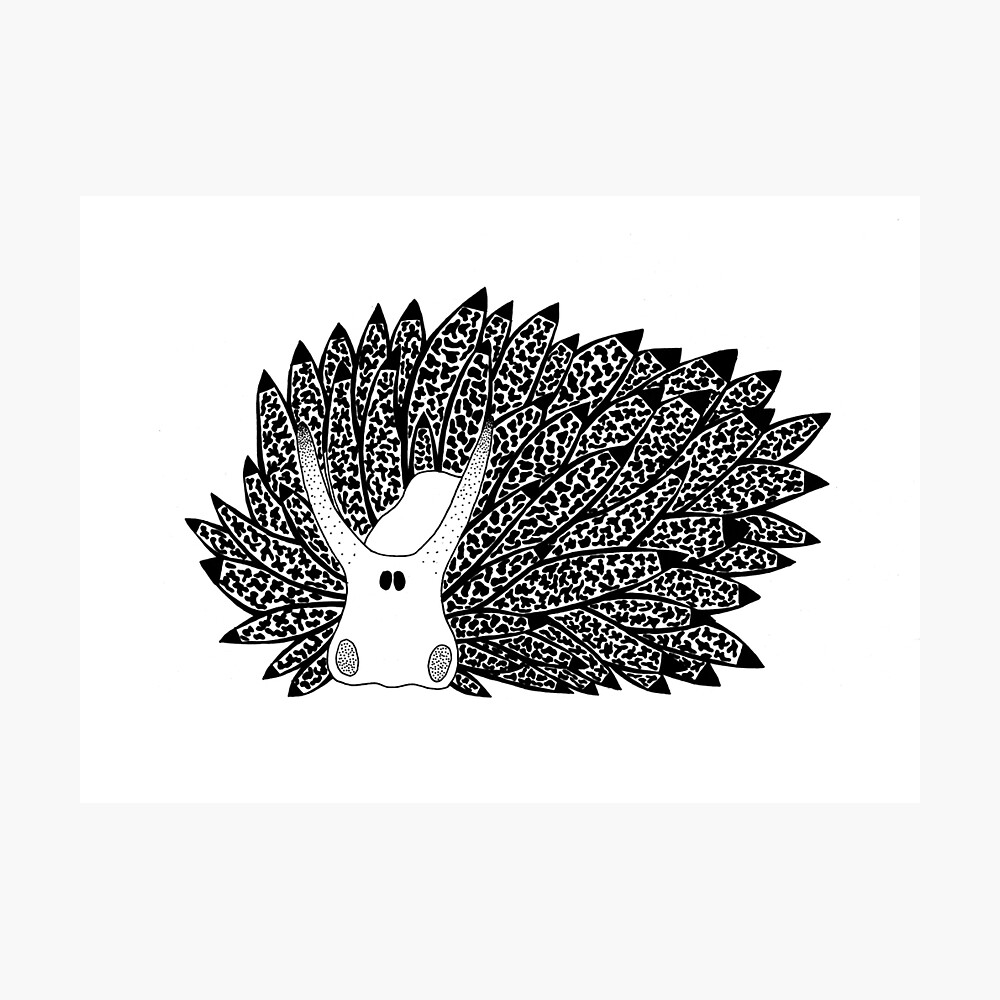 Leaf Sheep Sea Slug (ink illustrations of weird animals that are real) Photographic Print
