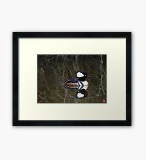 Hooded Merganser- Male Framed Print